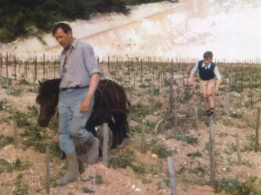 Boy and Dad Plowing Vineyard with