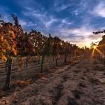 nature-landscapes_widewallpaper_sunrise-on-a-perfect-vineyard_19718
