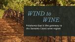 wind to wine petaluma ava