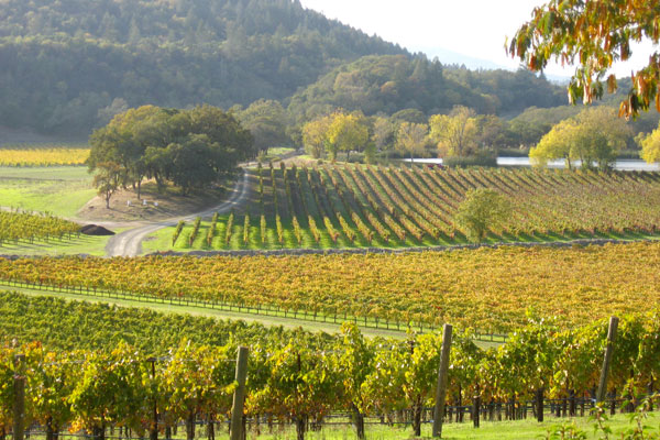 picture of vineyard in the St. Helena AVA