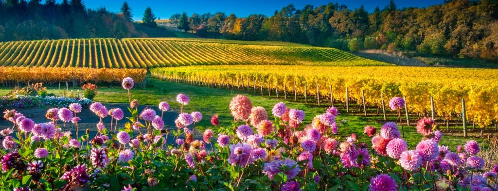 picture of Oregon vineyard and flowers