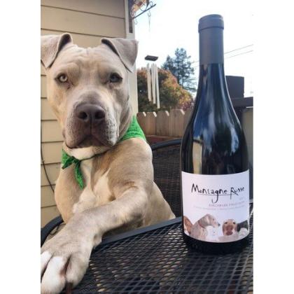 pitbull with pinot noir